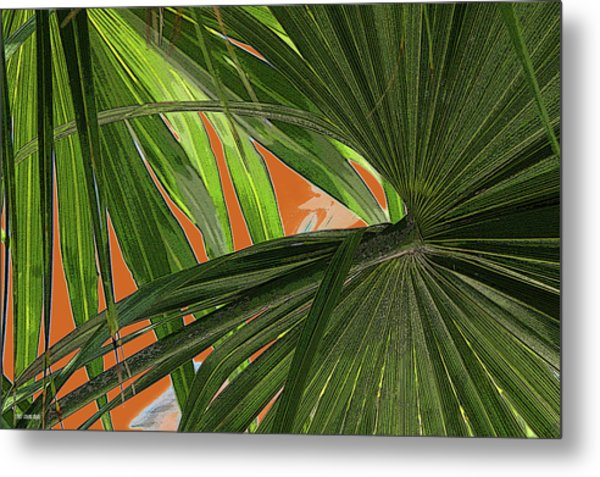 Tropical Palms 2 Metal Print by Frank Mari