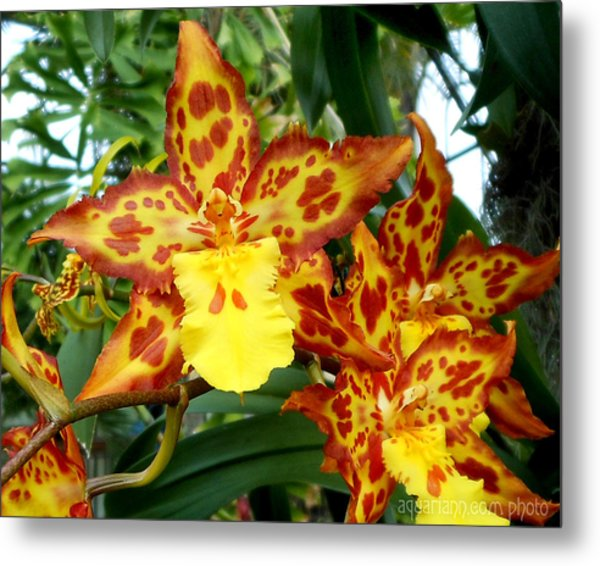 Tropical Red And Yellow Orchids Metal Print
