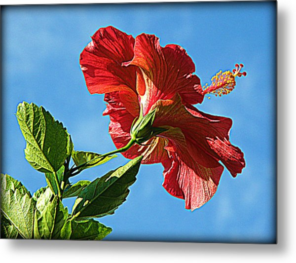 Tropical Red Hibiscus  Metal Print