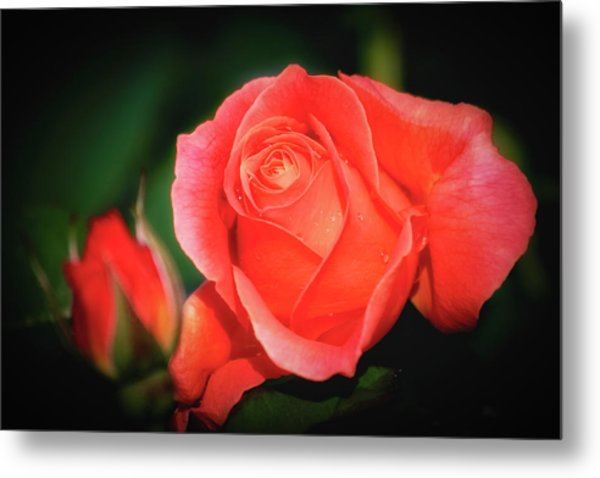 Tropicana Rose Metal Print