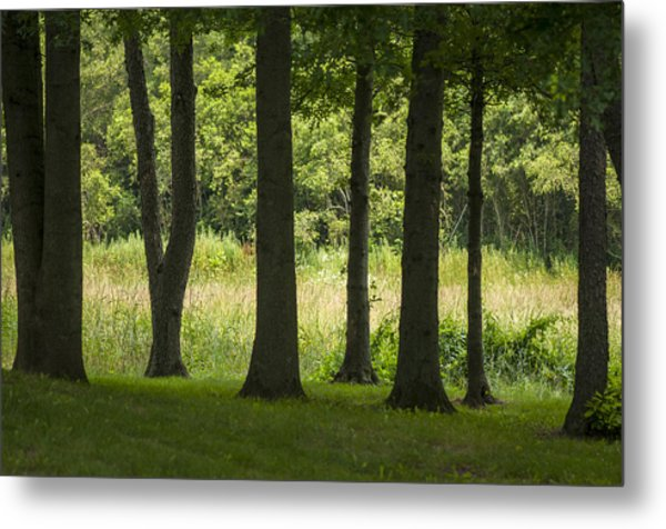 Trunks In A Row Metal Print