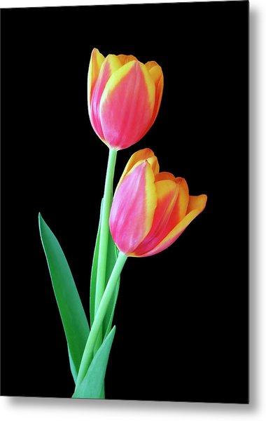 Tulip Duo Metal Print