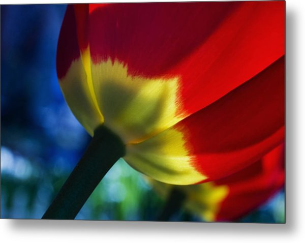Tulip Expression Wide Metal Print by Shawn Young