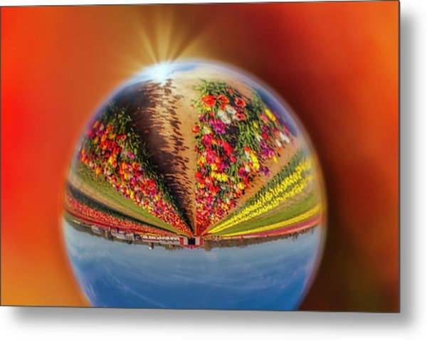 Metal Print featuring the photograph Tulip Farm Reflections And Refractions by Susan Candelario