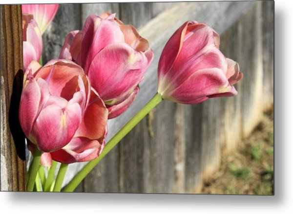 Tulip Fence Metal Print