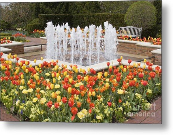 Tulip Garden Metal Print by Elvira Butler