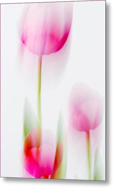 Tulip Impressions  Metal Print
