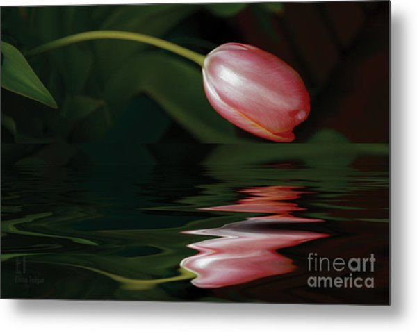 Tulip Reflections Metal Print