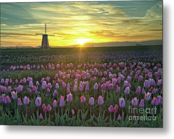 Metal Print featuring the photograph Tulip Sunrise by Craig Leaper