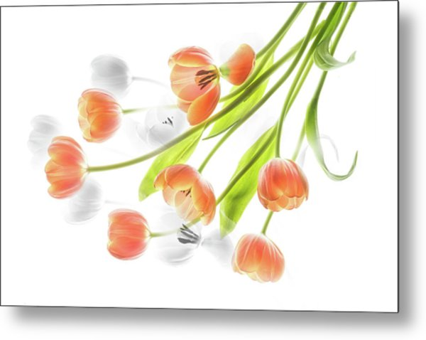 A Creative Presentation Of A Bouquet Of Tulips. Metal Print
