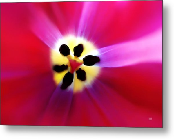 Tulip Vivid Floral Abstract Metal Print