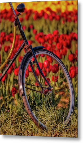 Metal Print featuring the photograph Tulips And Bicycle by Susan Candelario