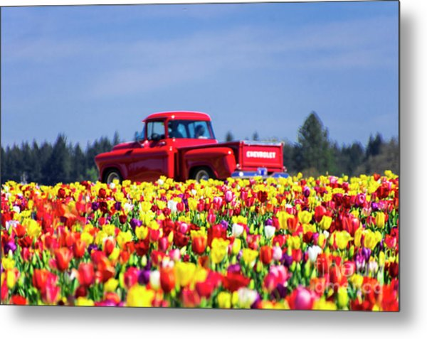 Tulips And Red Chevy Truck Metal Print