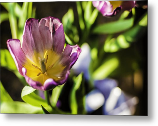 Tulips At The End Metal Print
