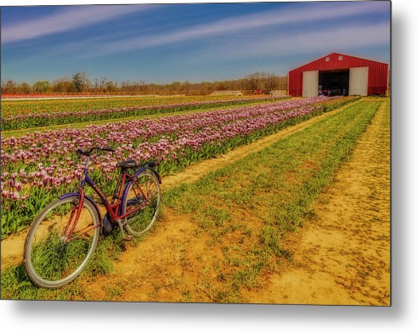 Metal Print featuring the photograph Tulips, Bicycle And Barn by Susan Candelario