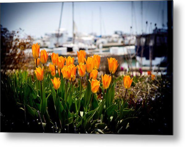 Tulips By The Harbor Metal Print
