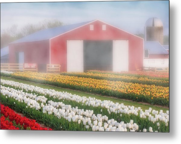 Metal Print featuring the photograph Tulips, Fog And Barn by Susan Candelario