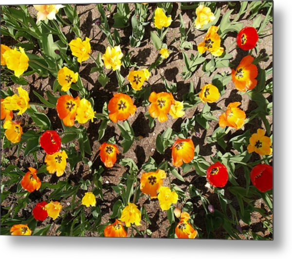 Tulips From A Birds Eye Metal Print by Jacob Stempky