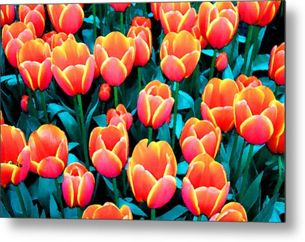 Tulips In Holland Metal Print by Gene Sizemore