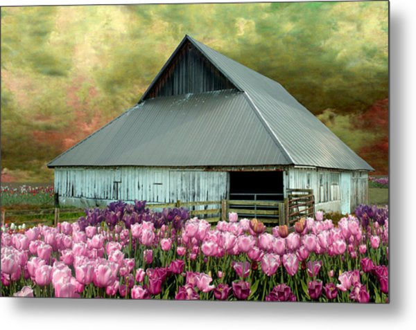 Tulips In Skagit Valley Metal Print