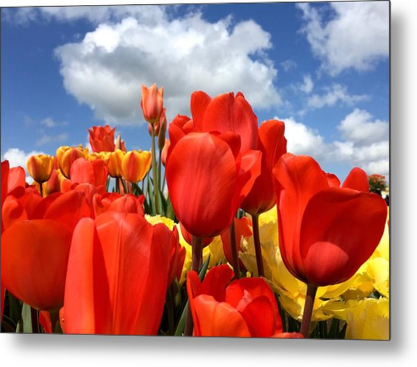 Tulips In The Sky Metal Print