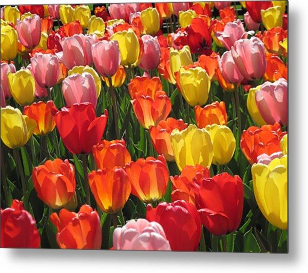Tulips Like Sunlight Metal Print