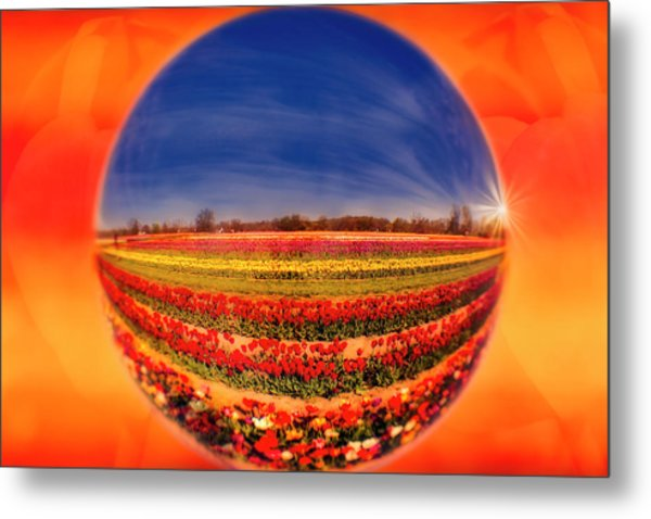 Metal Print featuring the photograph Tulips Reflections And Refractions by Susan Candelario