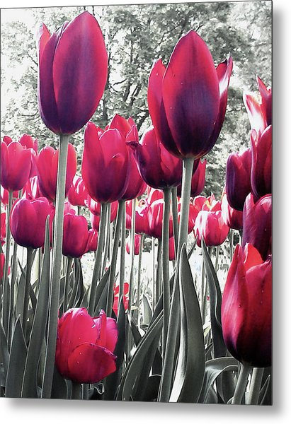 Tulips Tinted Metal Print