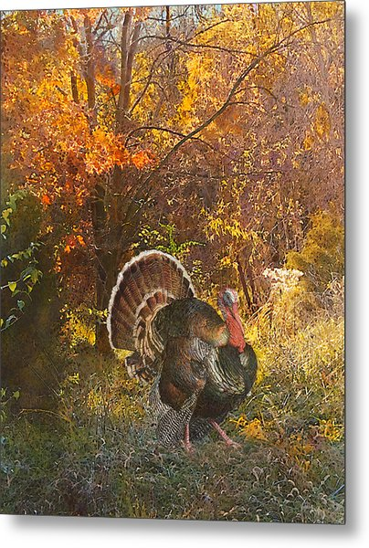 Turkey In The Woods Metal Print