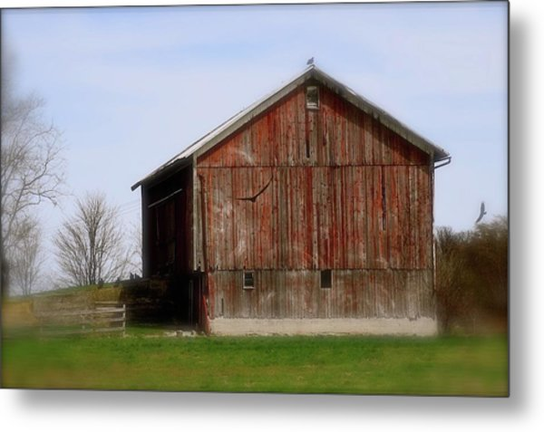 Turkey Vultures Hovering Around The Barn Metal Print