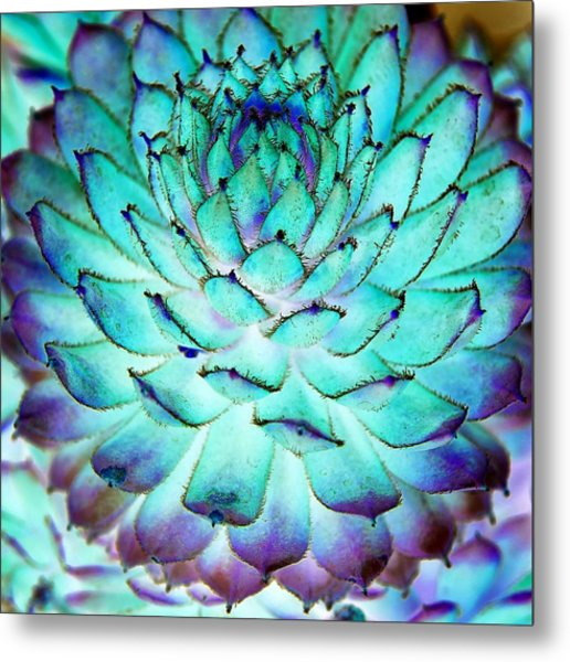 Metal Print featuring the photograph Turquoise Succulent 1 by Marianne Dow