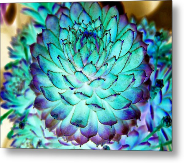 Metal Print featuring the photograph Turquoise Succulent 2 by Marianne Dow