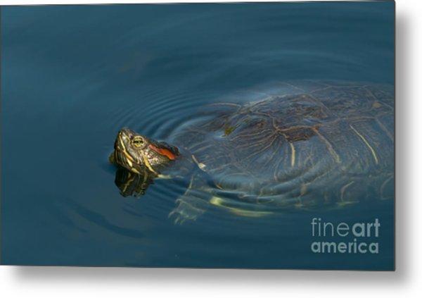 Turtle Floating In Calm Waters Metal Print