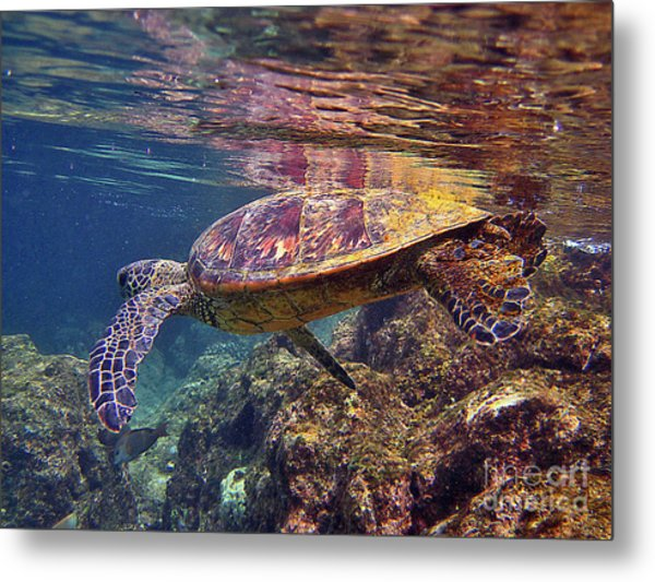 Turtle Reflections Metal Print
