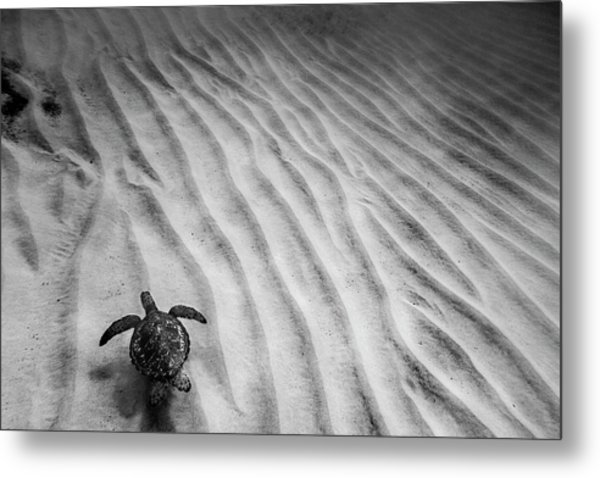Turtle Ridge Metal Print
