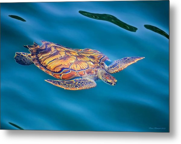 Turtle Up Metal Print