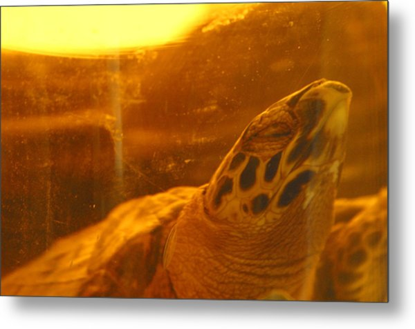 Turtled Metal Print by Jez C Self