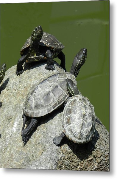 Turtles At A Temple In Narita, Japan Metal Print