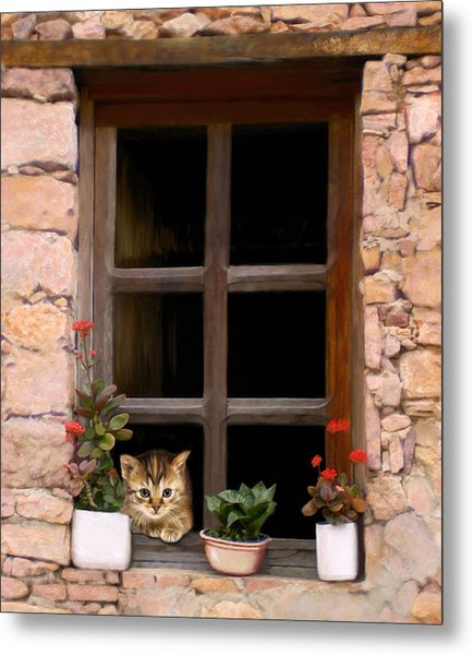 Tuscan Kitten In The Window Metal Print by Bob Nolin