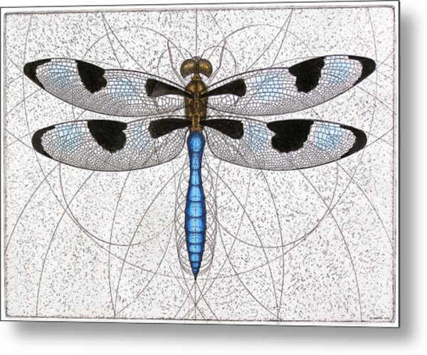 Twelve Spotted Skimmer Metal Print