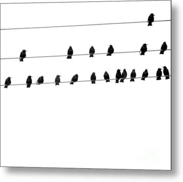 Twenty Blackbirds Metal Print