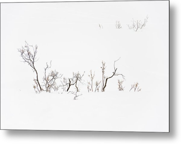 Twigs In Snow Metal Print