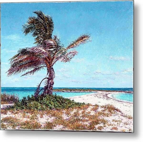 Twin Cove Palm Metal Print