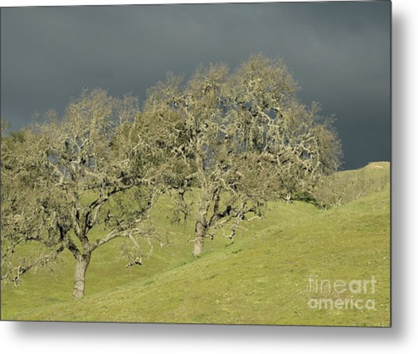 Twin Oaks Metal Print