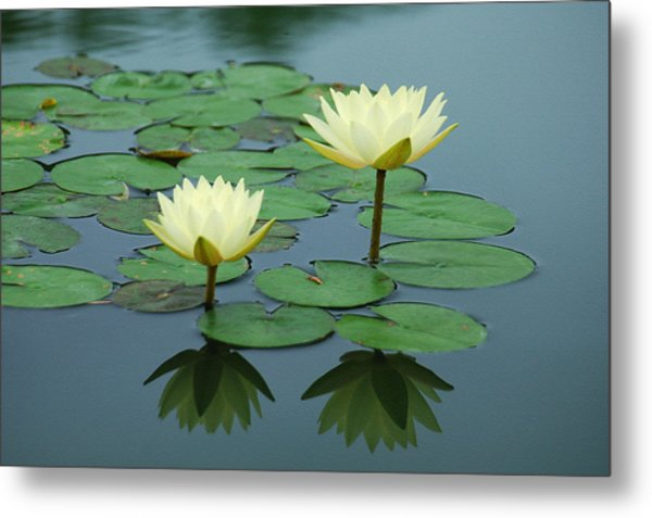 Twin Reflections Metal Print