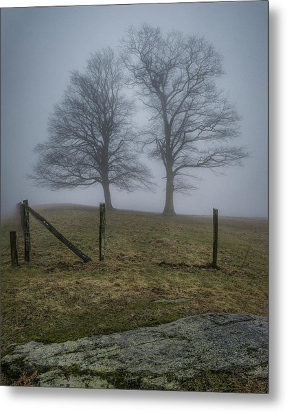 Twin Trees Late Fall Foggy Morning Metal Print