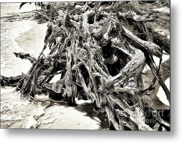 Twisted Driftwood Metal Print