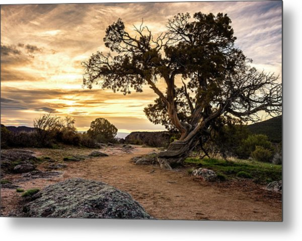 Twisted Sunset Metal Print