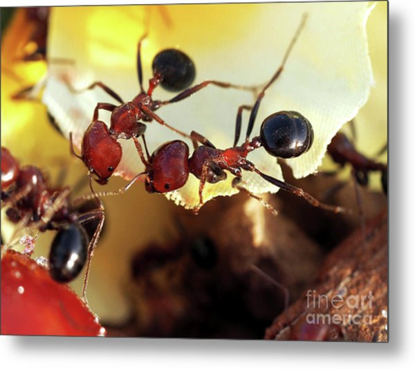 Two Ants In Sunny Day Metal Print