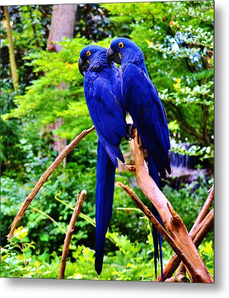 Two Birds Of A Feather Metal Print